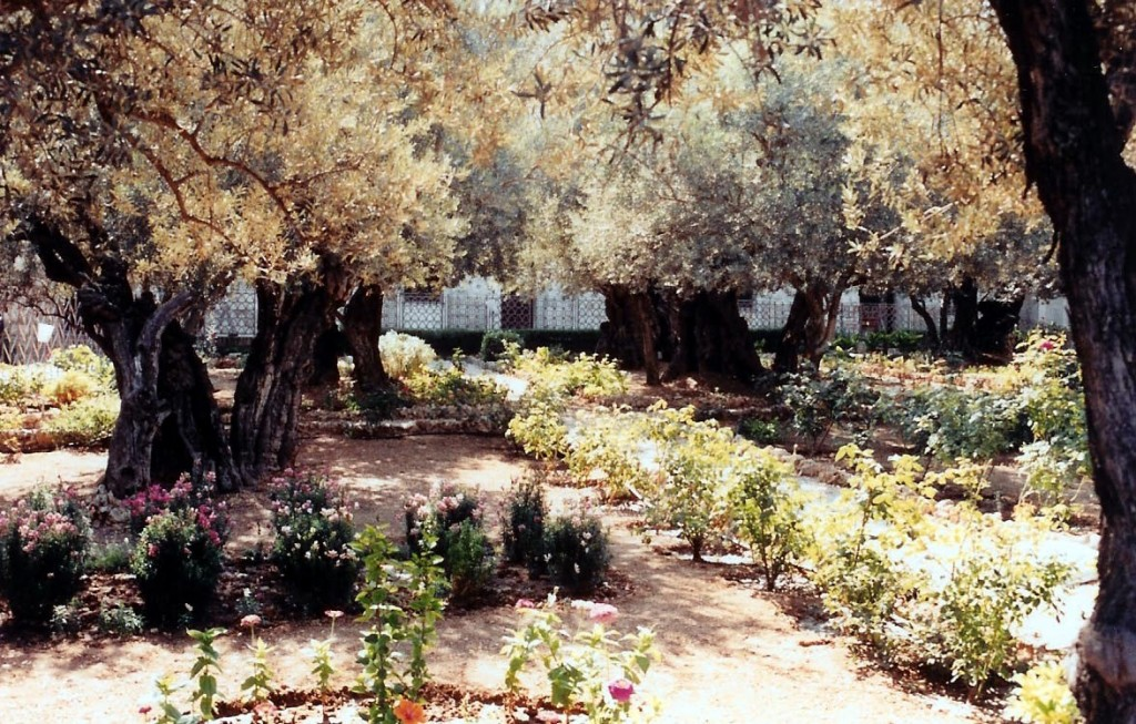15.02.02.A. THE GARDEN OF GETHSEMANE
