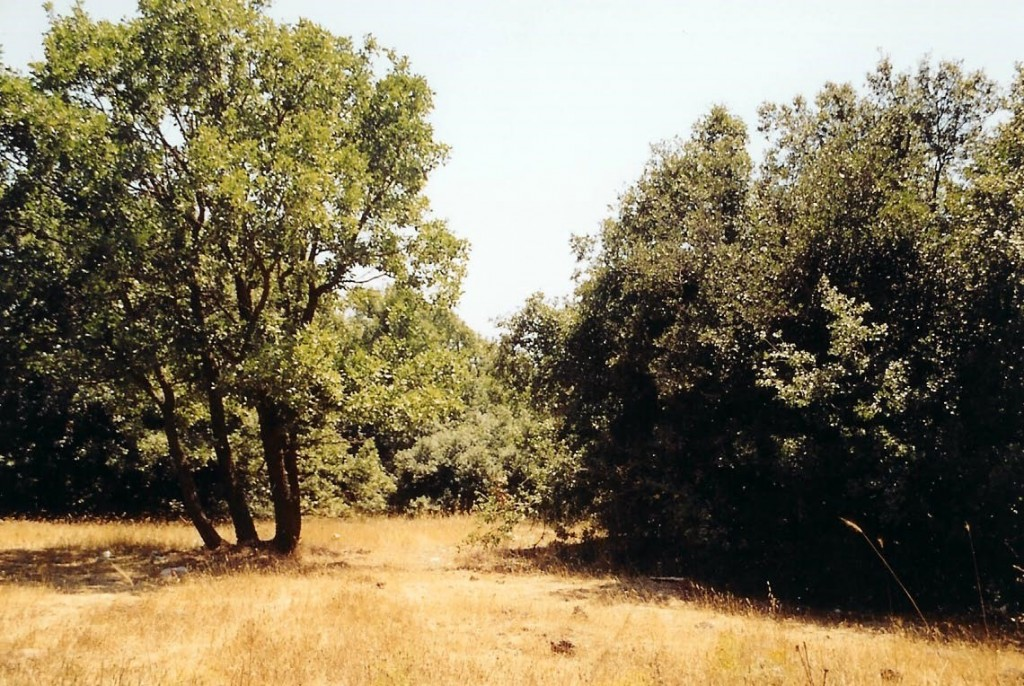 04.07.01.A. A NATURAL FOREST TYPICAL OF FIRST CENTURY WOODLANDS