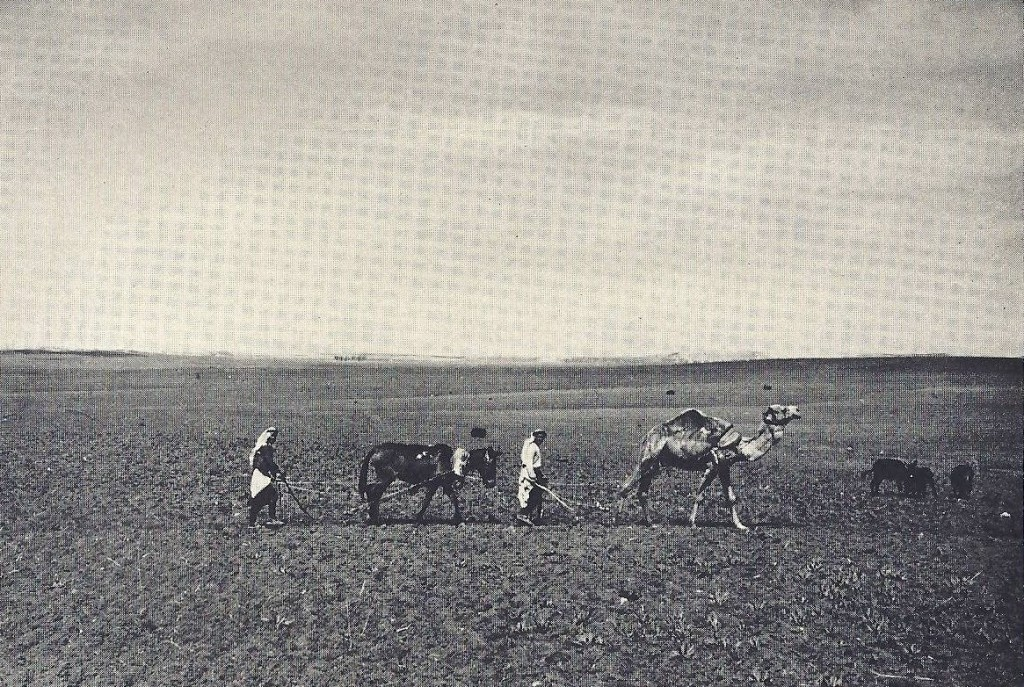 04.07.01.E. TWO ARABS PLOWING IN THE 1920S AS IN BIBLICAL TIMES (2)