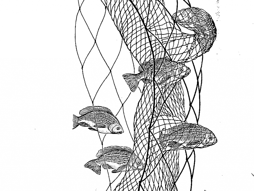 06.03.01.B. AN ILLUSTRATION OF HOW FISH ARE CAUGHT IN A TRAMMEL NET (2)