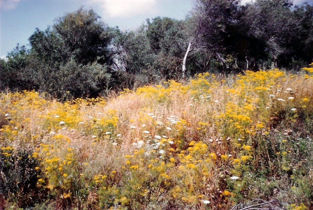 08.04.02.A. WILD FLOWERS OF ISRAEL